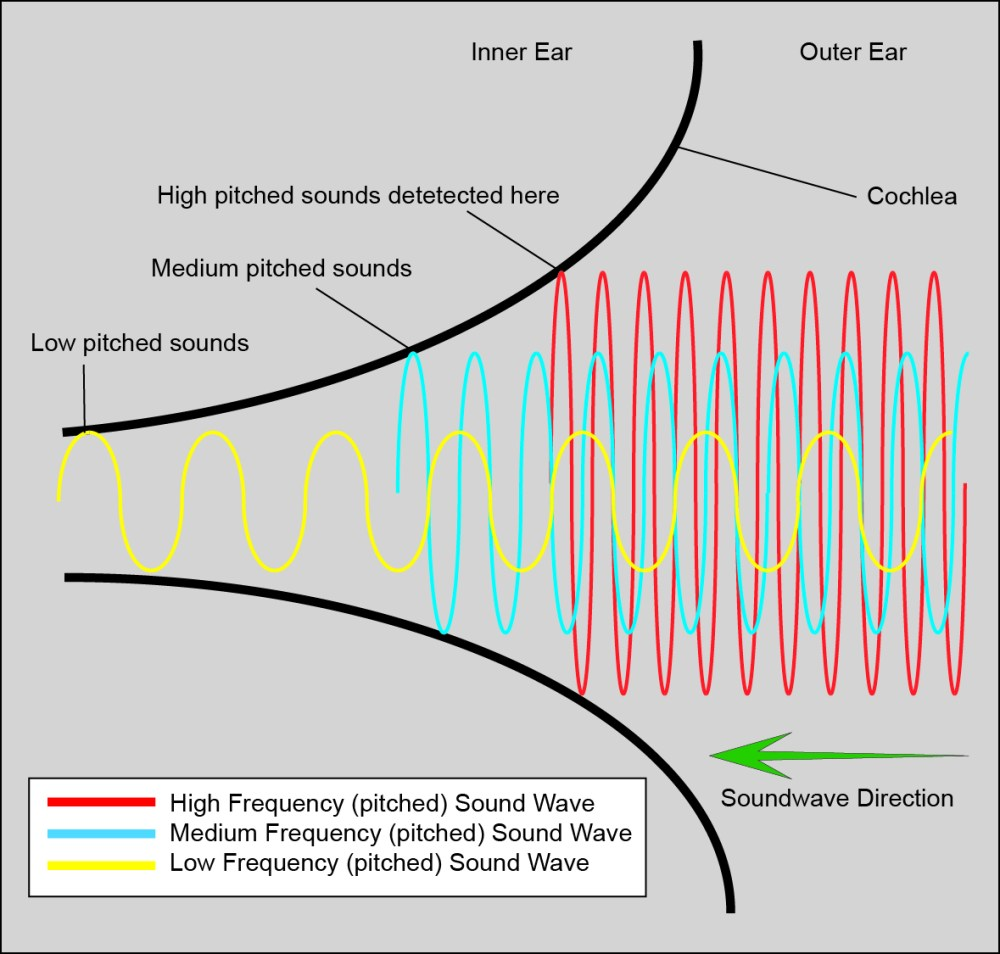 medium resolution of file cochlear function diagram jpg