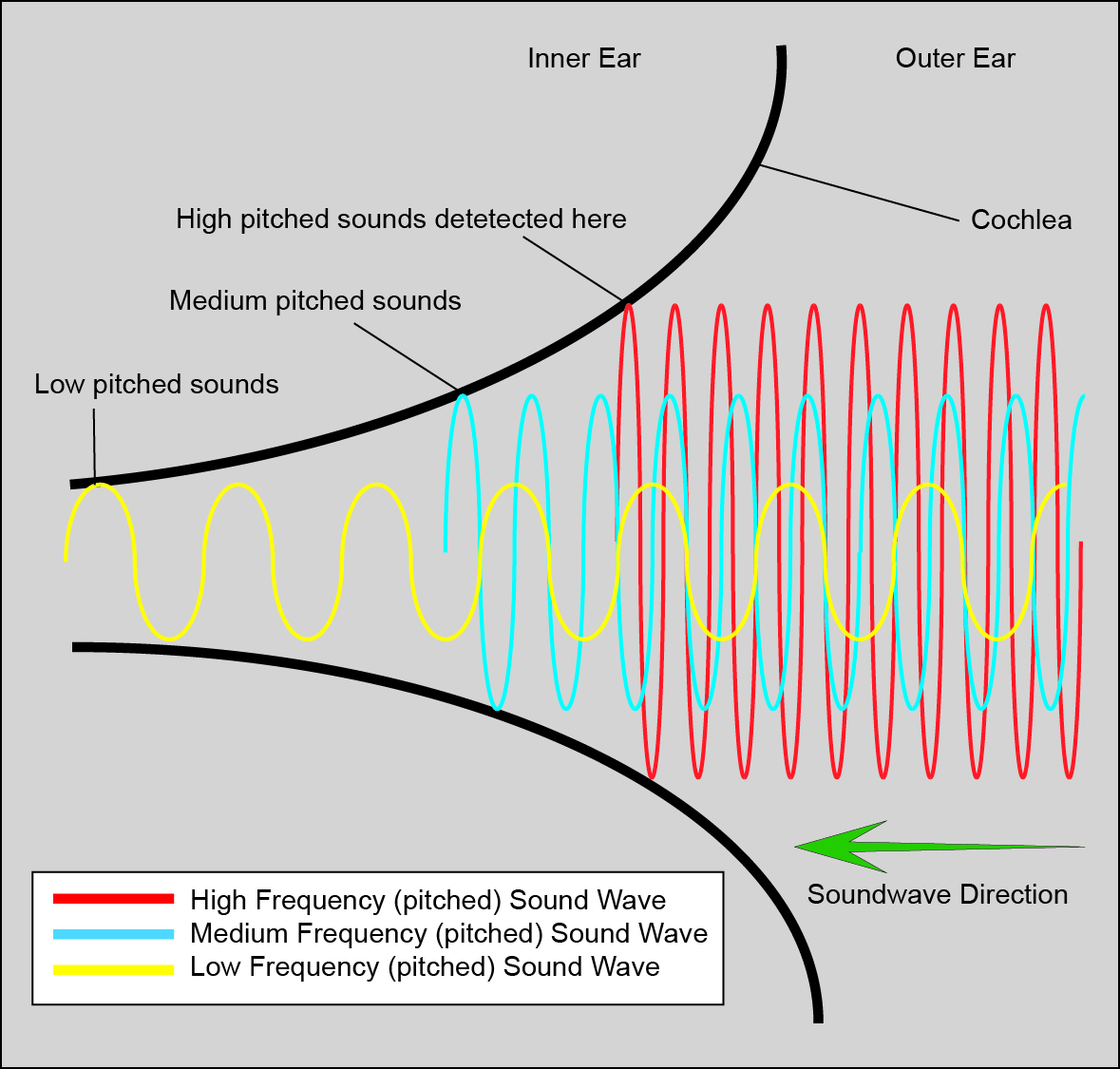 hight resolution of file cochlear function diagram jpg