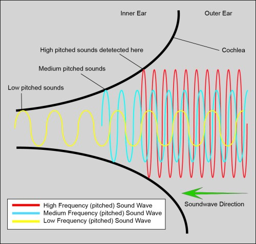 small resolution of file cochlear function diagram jpg