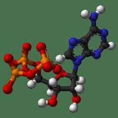 Diagram Of The Atp Molecule Cisco Network Symbols Adenosine Triphosphate Wikipedia