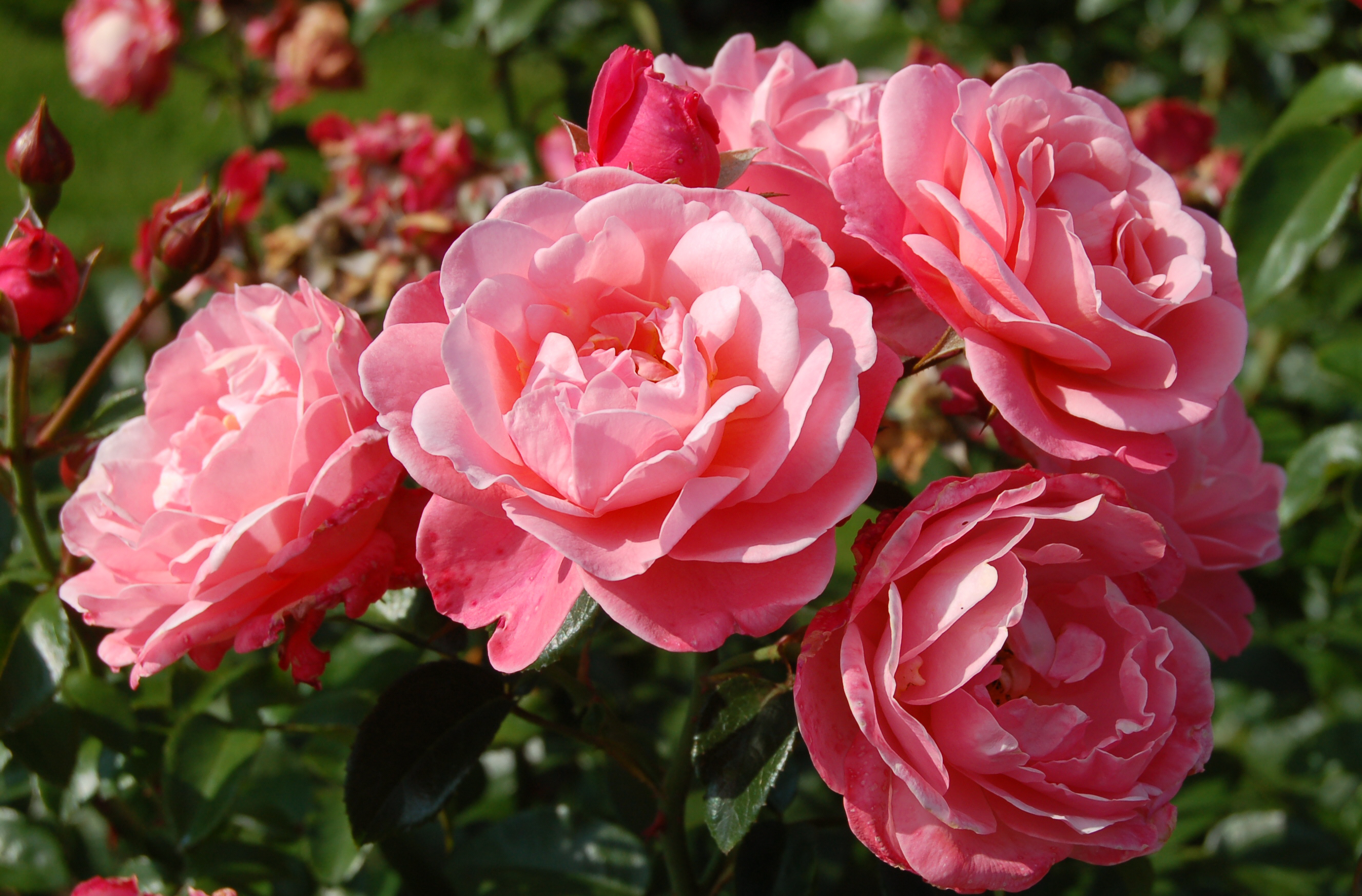 Mein Schöner Garten – Wikipedia