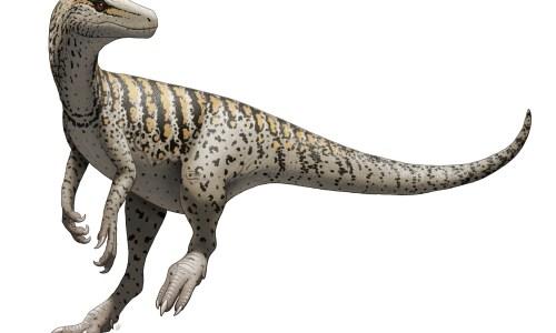 https://i0.wp.com/upload.wikimedia.org/wikipedia/commons/8/86/Herrerasaurus_ischigualastensis_Illustration.jpg?resize=500%2C300&ssl=1