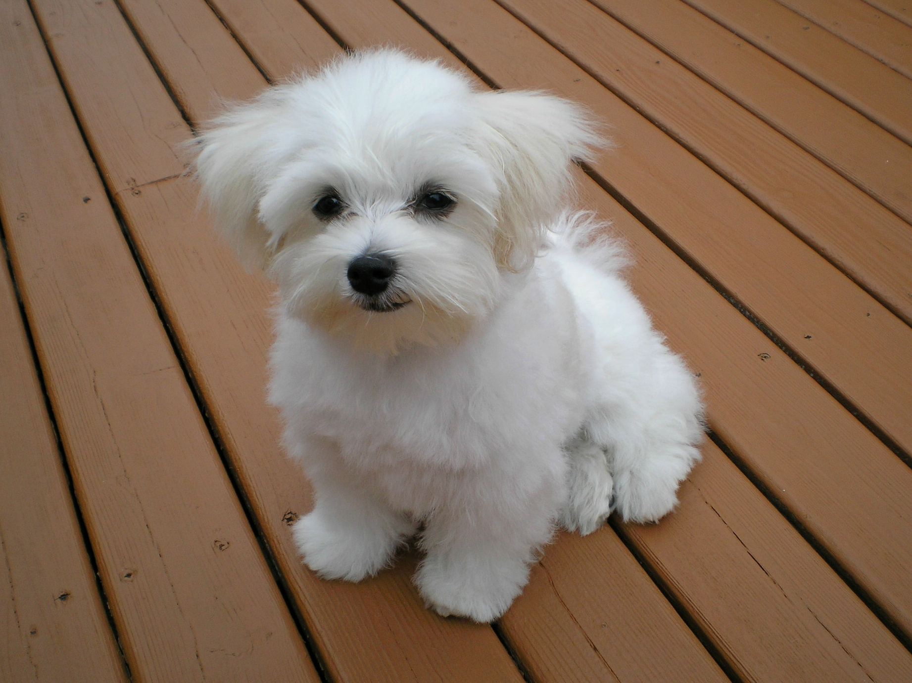 Cute Baby Pets Live Wallpaper Download Tips On Puppy Proofing Your Own Yard Coops And Cages