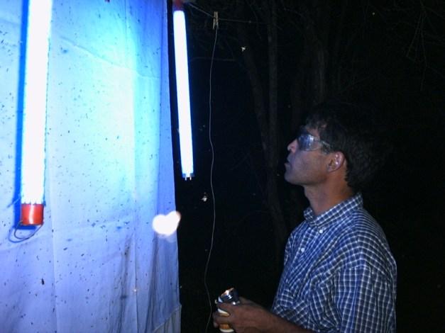 מכיוון שחרקים נמשכים אליה ניתן להשתמש במנורות אולטרא סגול לאיסוף חרקים לצורך מחקר