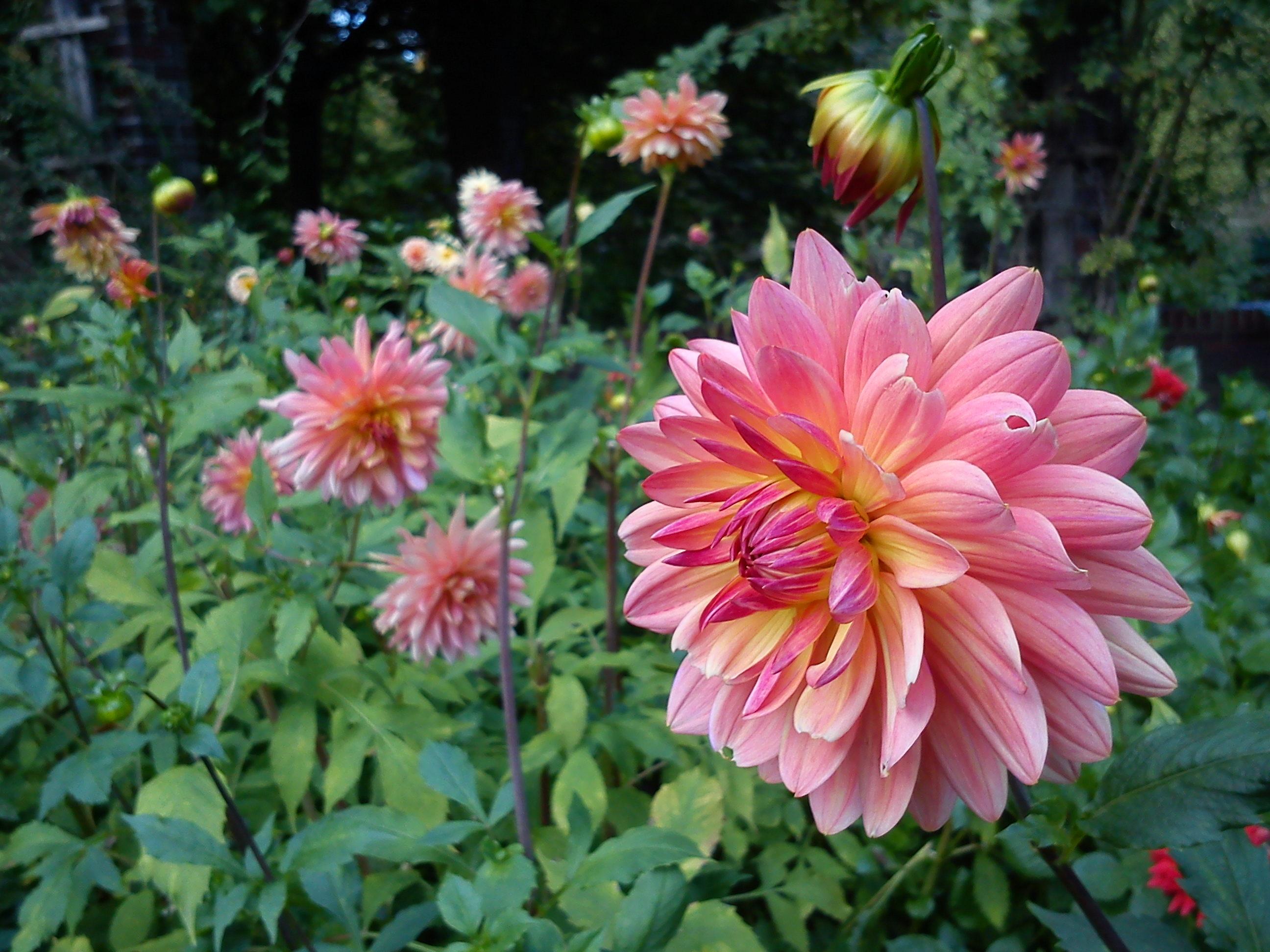 How Build Your Garden