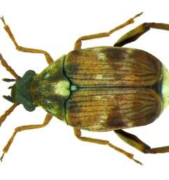beetle body part diagram labeled [ 8590 x 5241 Pixel ]
