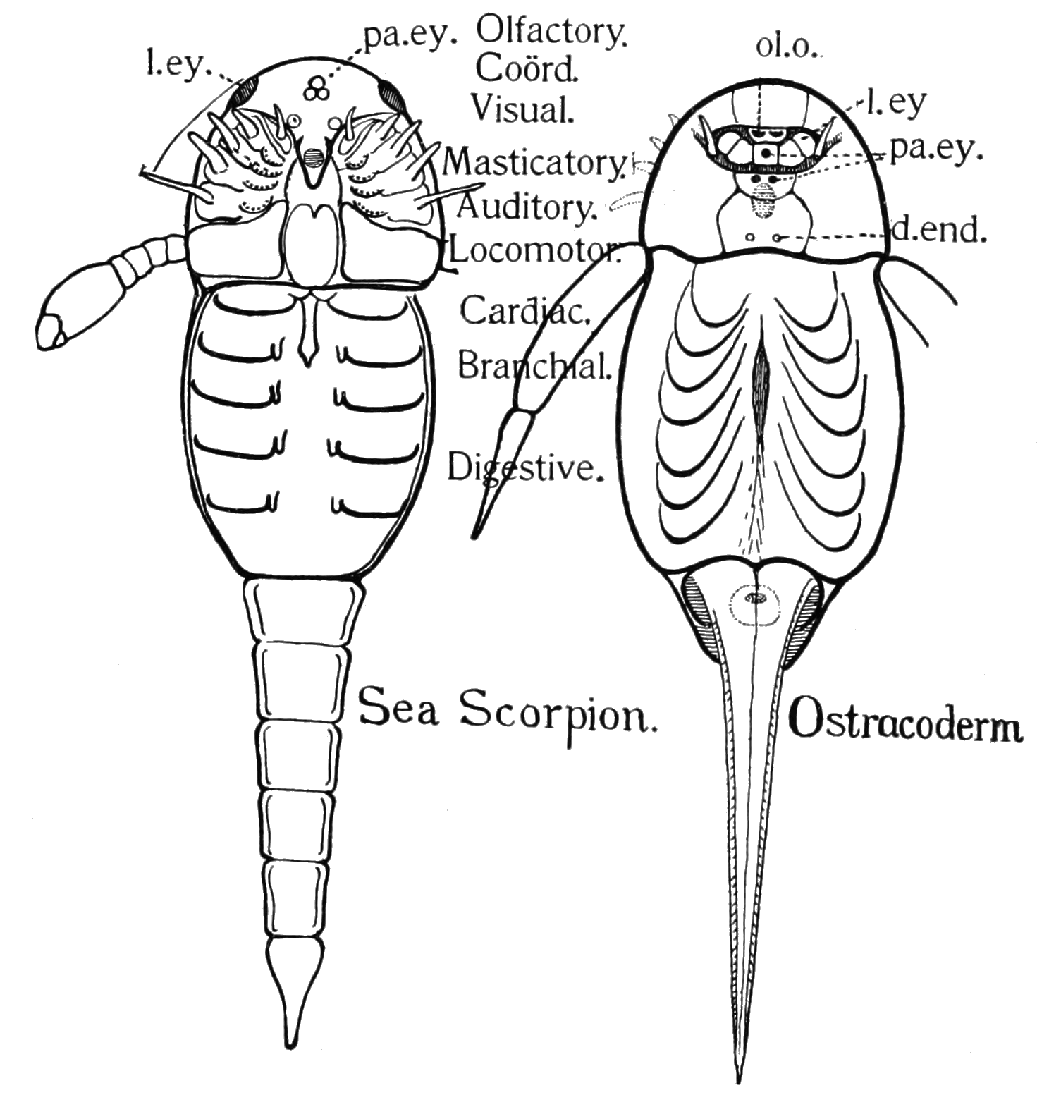 hight resolution of file psm v82 d427 sea scorpion and an ostracoderm png