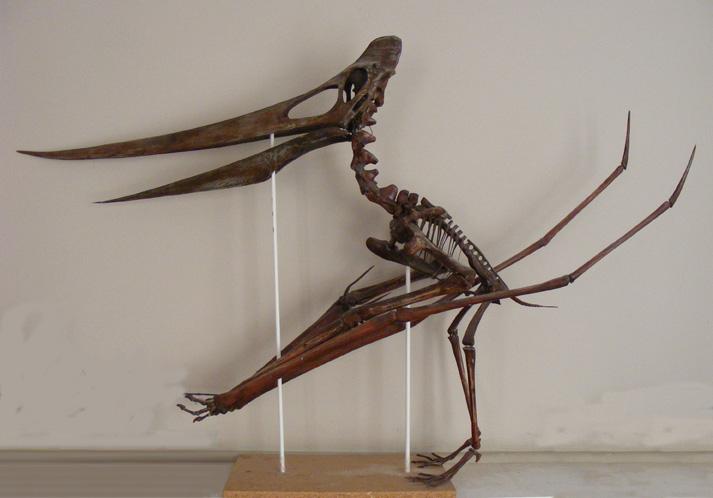 Pteranodon é um pterossauro pterodactilóide. Fonte da imagem: Wikipedia