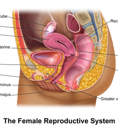 fallopian tube diagram of woman [ 2200 x 1800 Pixel ]