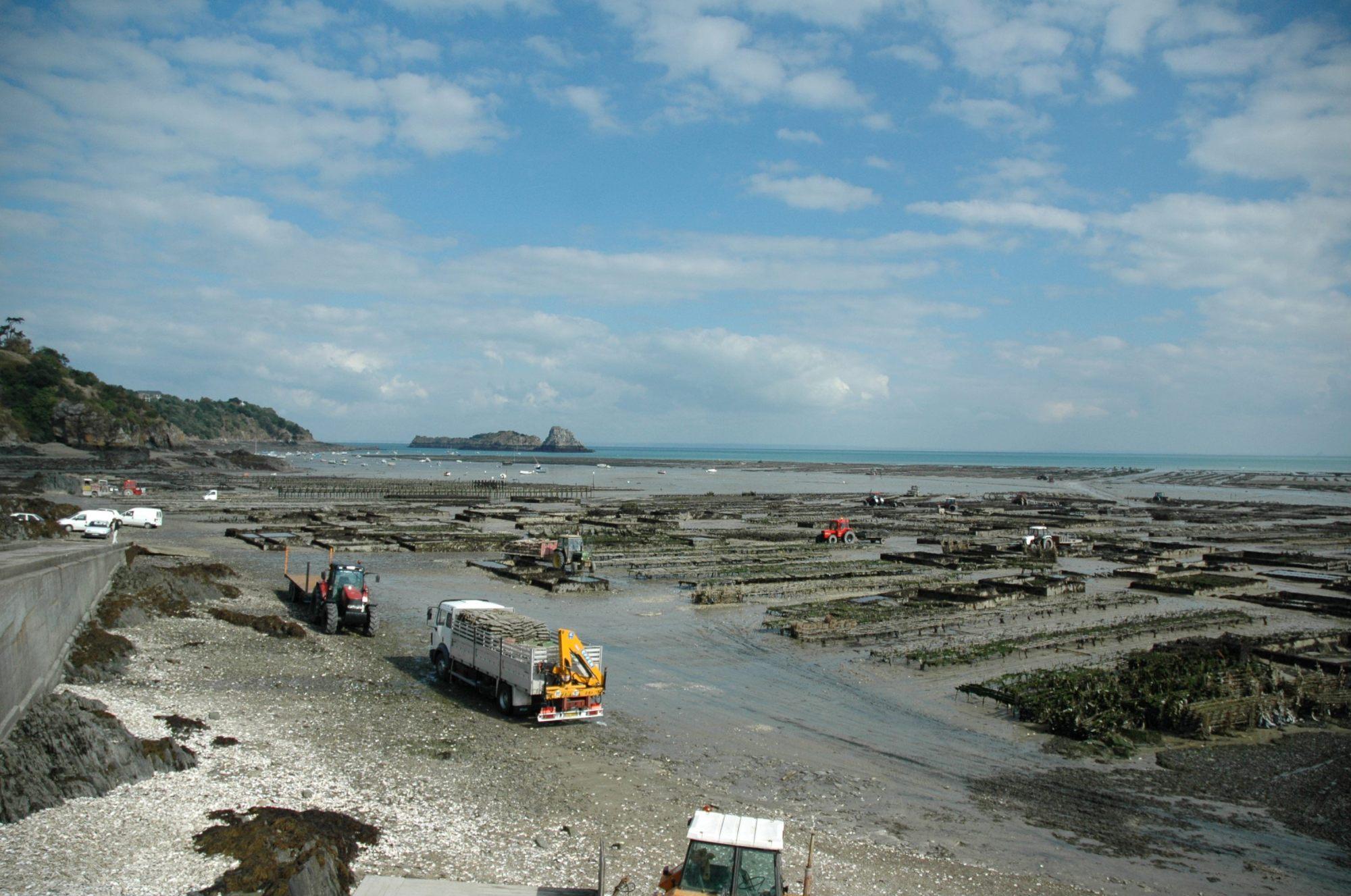 hight resolution of oyster farming