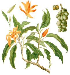 magnolium tree diagram [ 1250 x 1390 Pixel ]