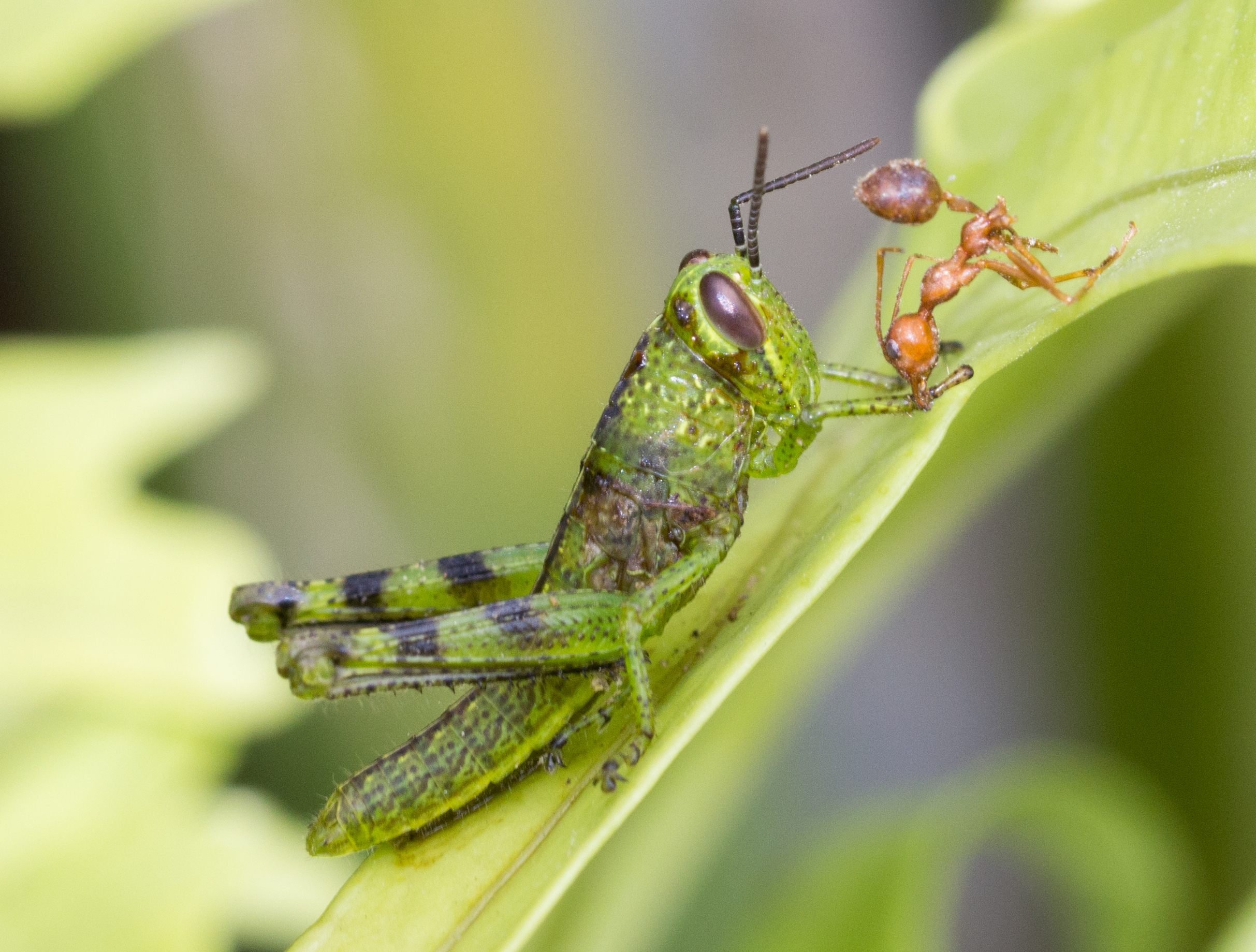 Are You A Grasshopper Or An Ant Risk Taking In Lab