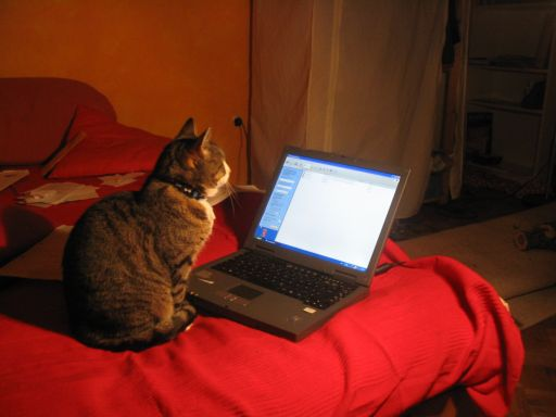 Cat in front of laptop