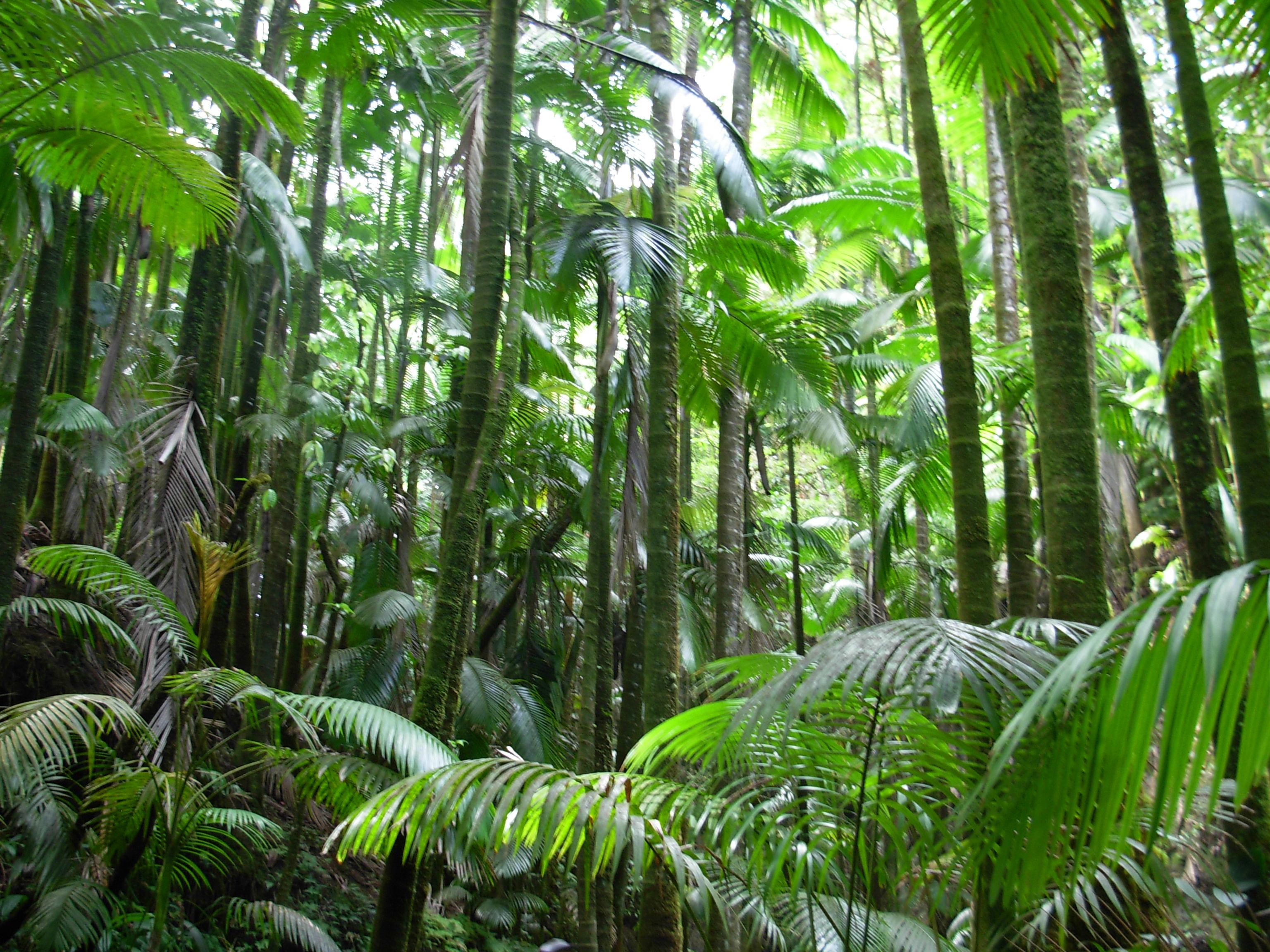 Fileflickr  Brewbooks  Palm Jungle  Hawaii Tropical