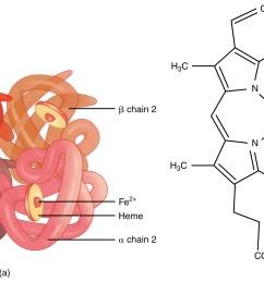 image result for hemoglobin structure [ 2271 x 1146 Pixel ]