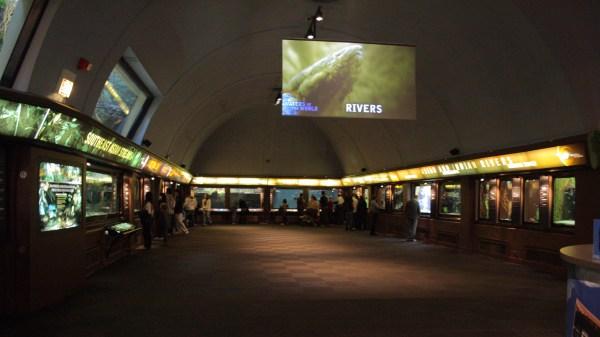 File Rivers Exhibits Shedd Aquarium