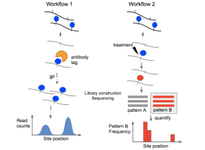 Epitranscriptomic sequencing  Wikipedia