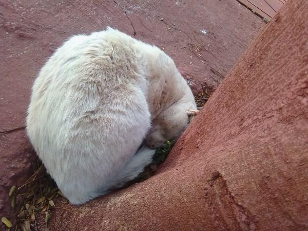 optical illusions find cat # 67