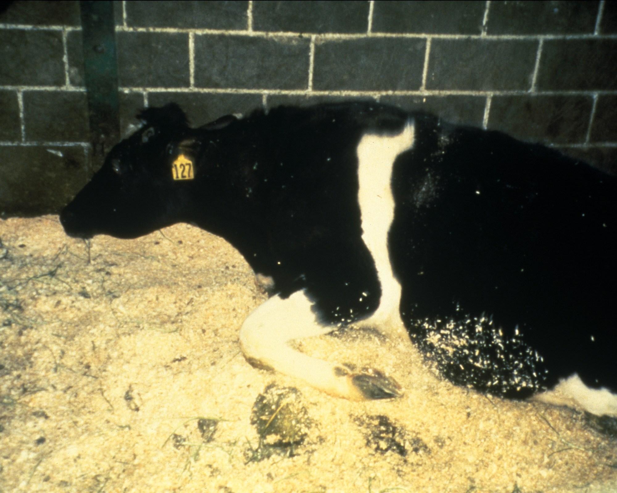 hight resolution of bovine spongiform encephalopathy