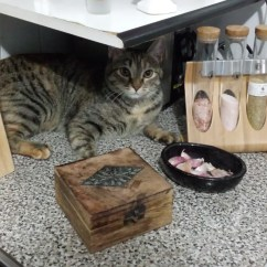Cats In The Kitchen Lighting Idea File Cat Part 1 Jpg Wikimedia Commons