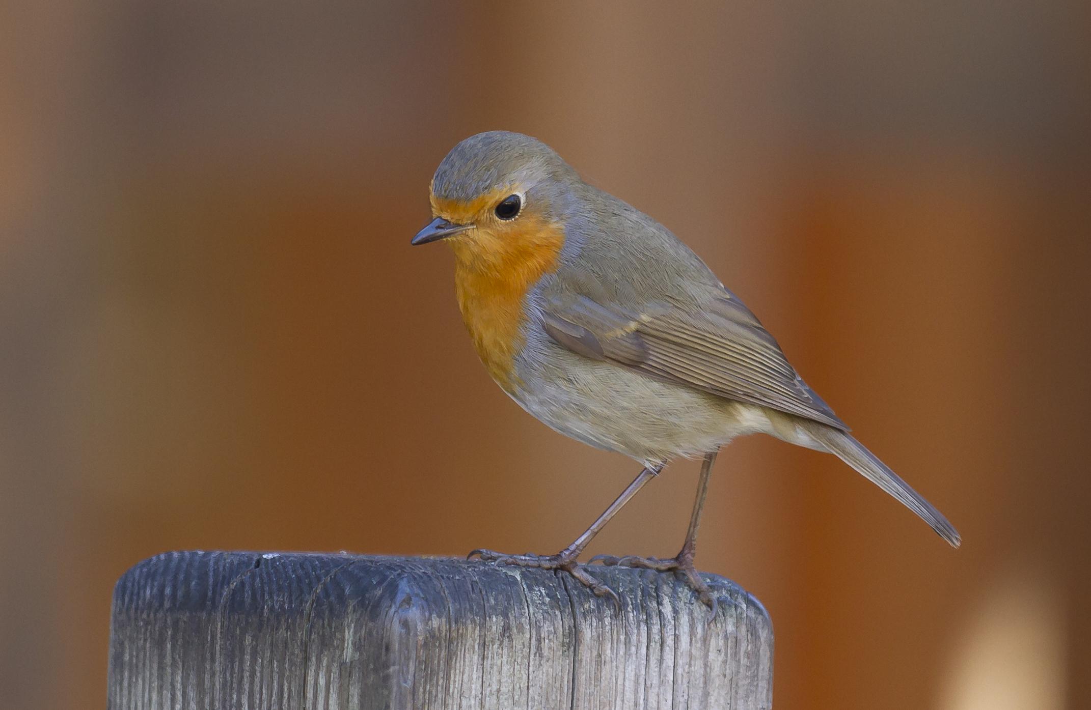 Same Name: Same Name, Different Bird (part 1)