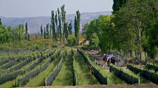 Algodon Wine Estates vineyards