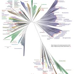 Branches Branching Tree Diagram Fujitsu Ten 86100 Wiring Em Terra De Homem Bactéria é Rainha Conheça A Nova