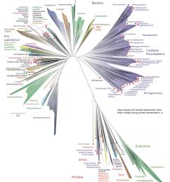 tree of life biology  [ 1230 x 1446 Pixel ]