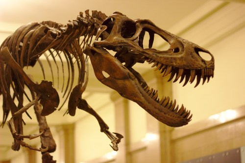 https://i0.wp.com/upload.wikimedia.org/wikipedia/commons/9/9a/Juvenile_T._Rex_at_Carnegie_Museum_of_Natural_History%2C_2013-12-14.jpg?resize=500%2C333&ssl=1