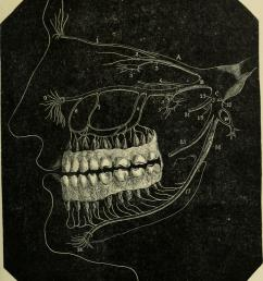 file notes on dental surgery and pathology with over 150 illustrations it is intended as a ready reference for the busy practitioner and a note book for  [ 2262 x 2672 Pixel ]