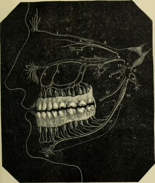 small resolution of file notes on dental surgery and pathology with over 150 illustrations it is intended as a ready reference for the busy practitioner and a note book for