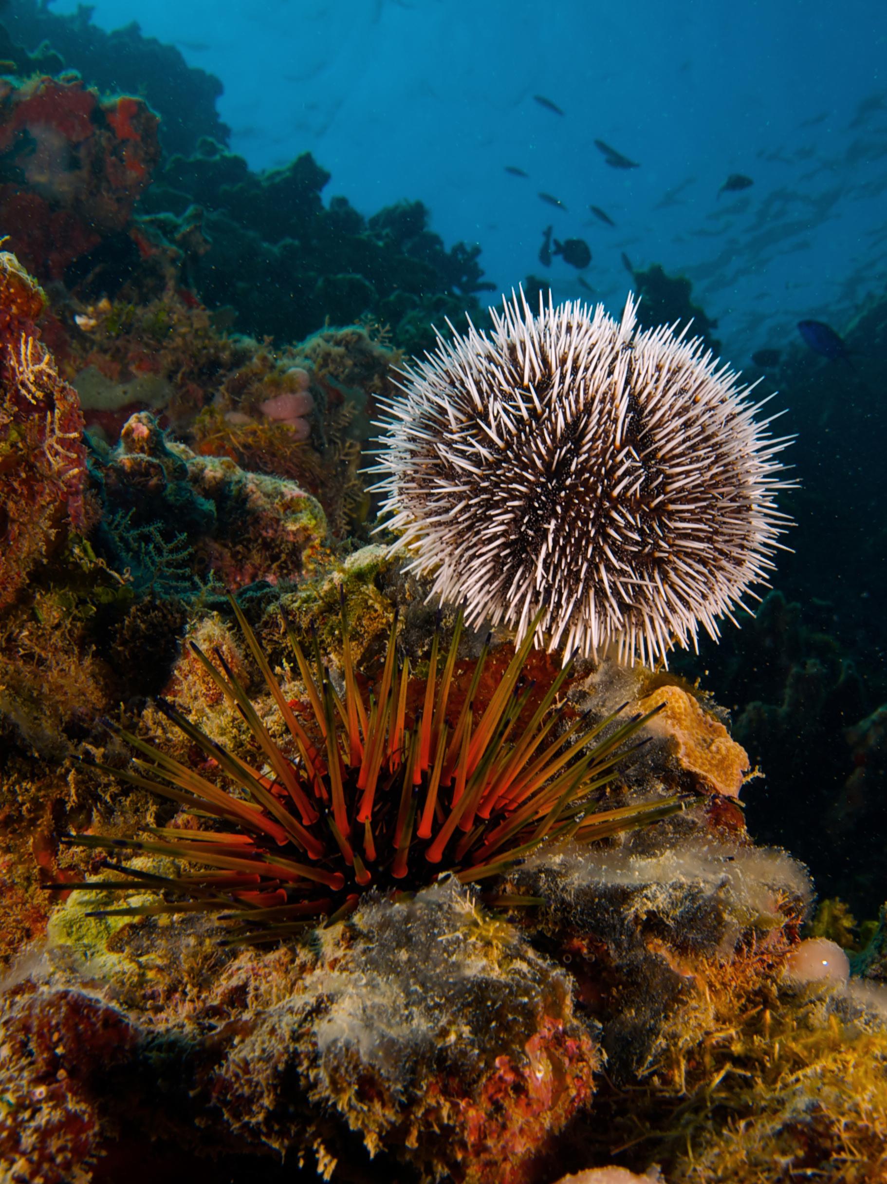 hight resolution of sea urchin