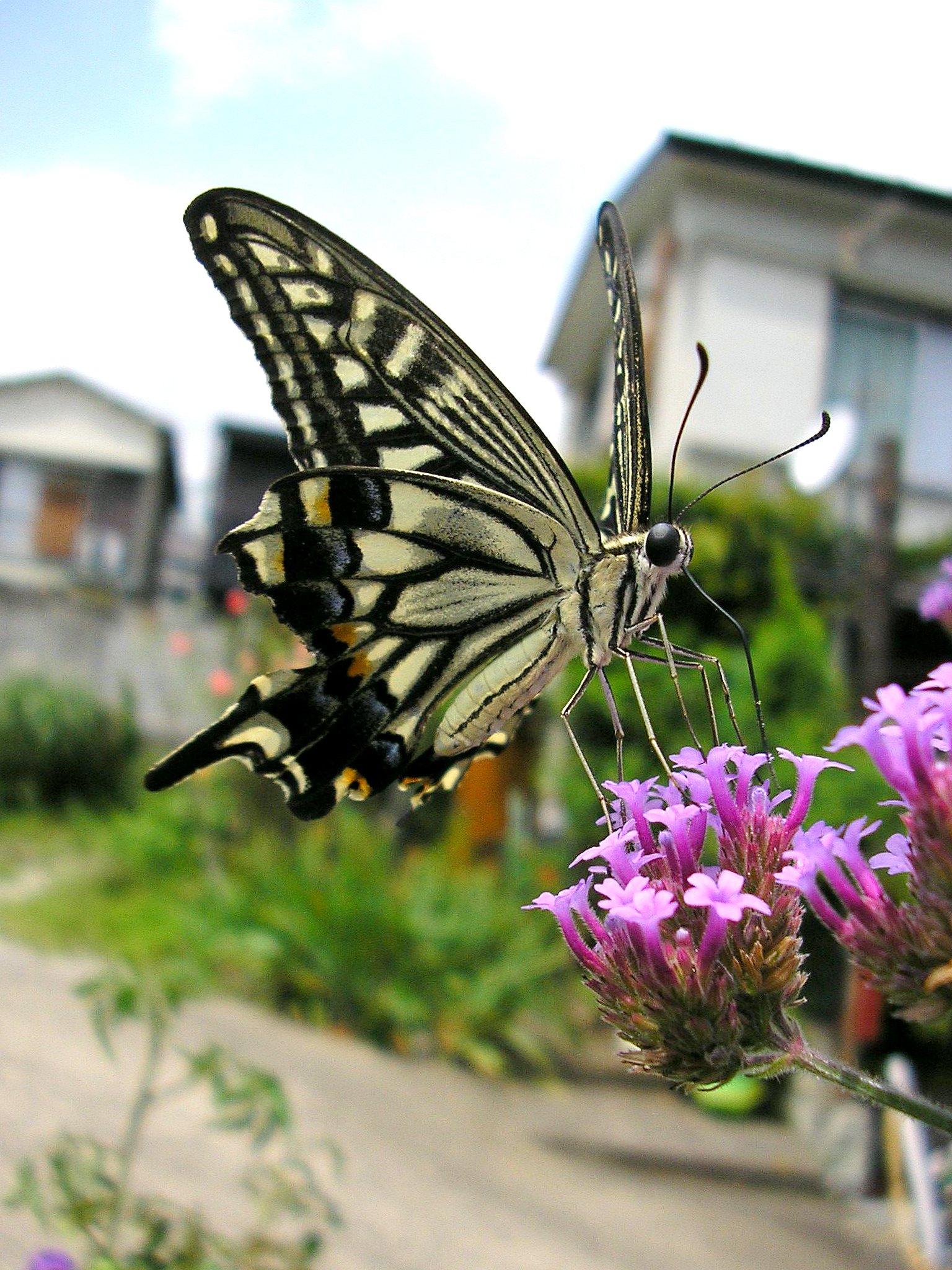 나비 위키백과 우리 모두의 백과사전