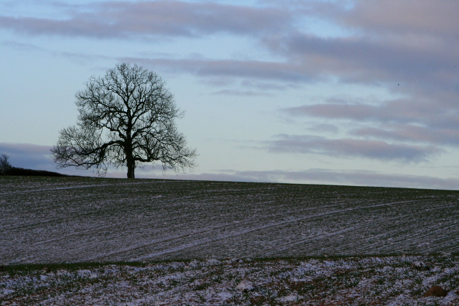 English: Lonely Tree In the fields to the west...