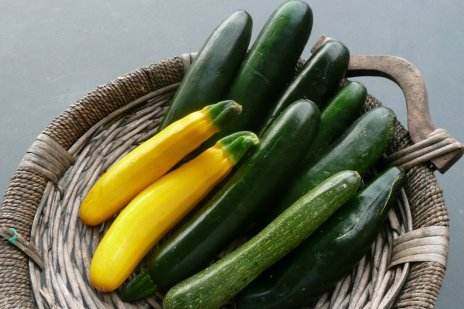 zucchini Easy Plants to Grow