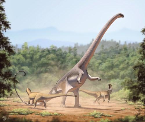 https://i0.wp.com/upload.wikimedia.org/wikipedia/commons/9/9e/Barosaurus_lentus1.jpg?resize=500%2C420&ssl=1