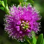 File Beautiful Purple Flower Jpg Wikimedia Commons