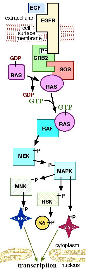 English: I (John Schmidt) made this diagram.