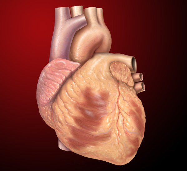 20 Hearts In Your Body Real Pictures And Ideas On Meta Networks