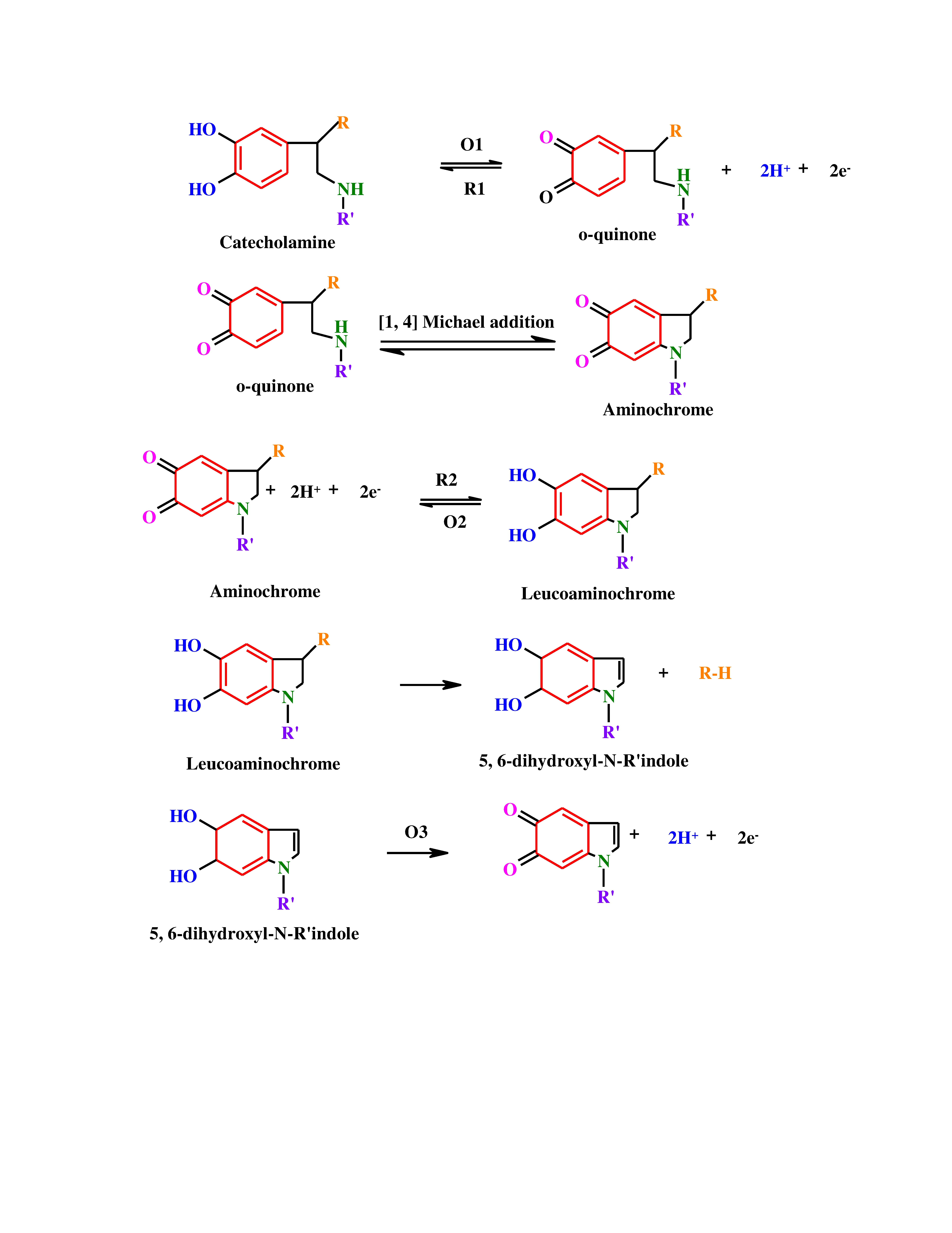 File:Mechanism for catecholamine oxidation-reduction reactions.jpg
