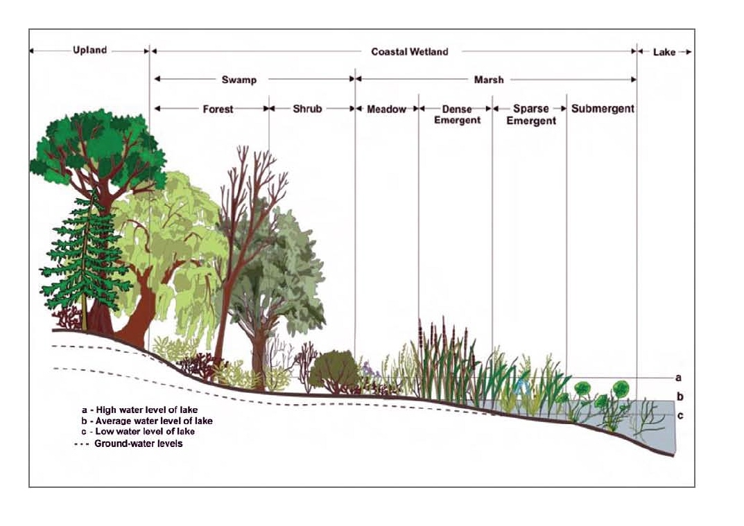 hight resolution of coastal wetland diagram
