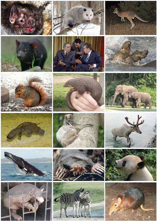 Animal Qui Commence Par U : animal, commence, Mammifère, Wikipédia