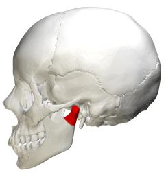 skull bone diagram temporomandibular joint [ 4500 x 4500 Pixel ]