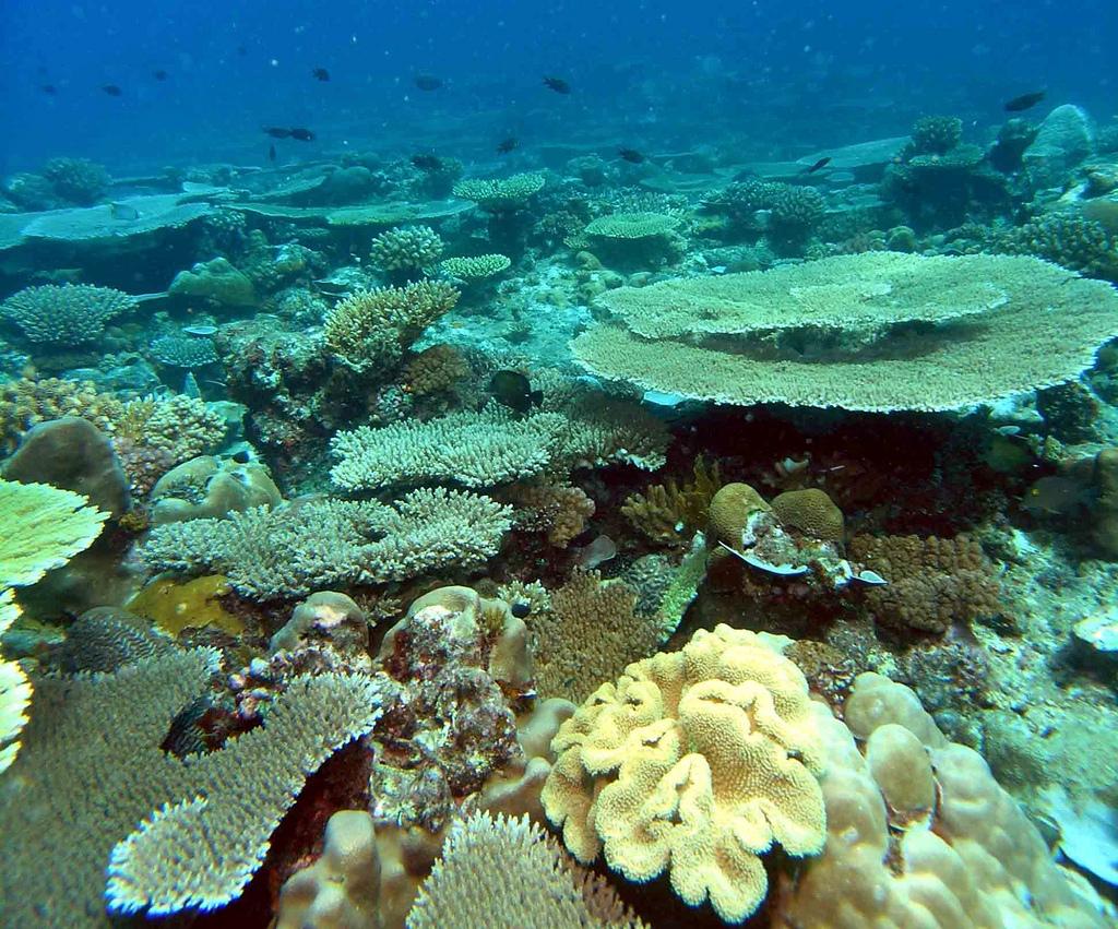 Mohli marinpark  Wikipedia