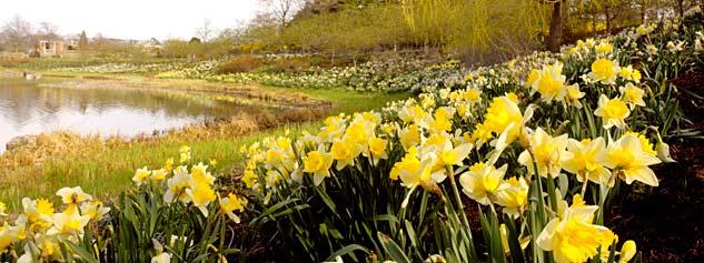 Chicago Botanic Garden Great Basin