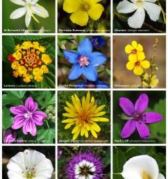 flower [ 4462 x 5932 Pixel ]