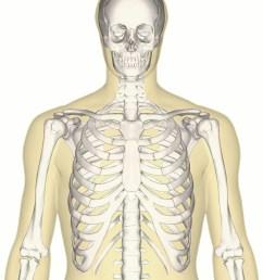 file human skeleton upper body anterior view jpg [ 3729 x 4636 Pixel ]