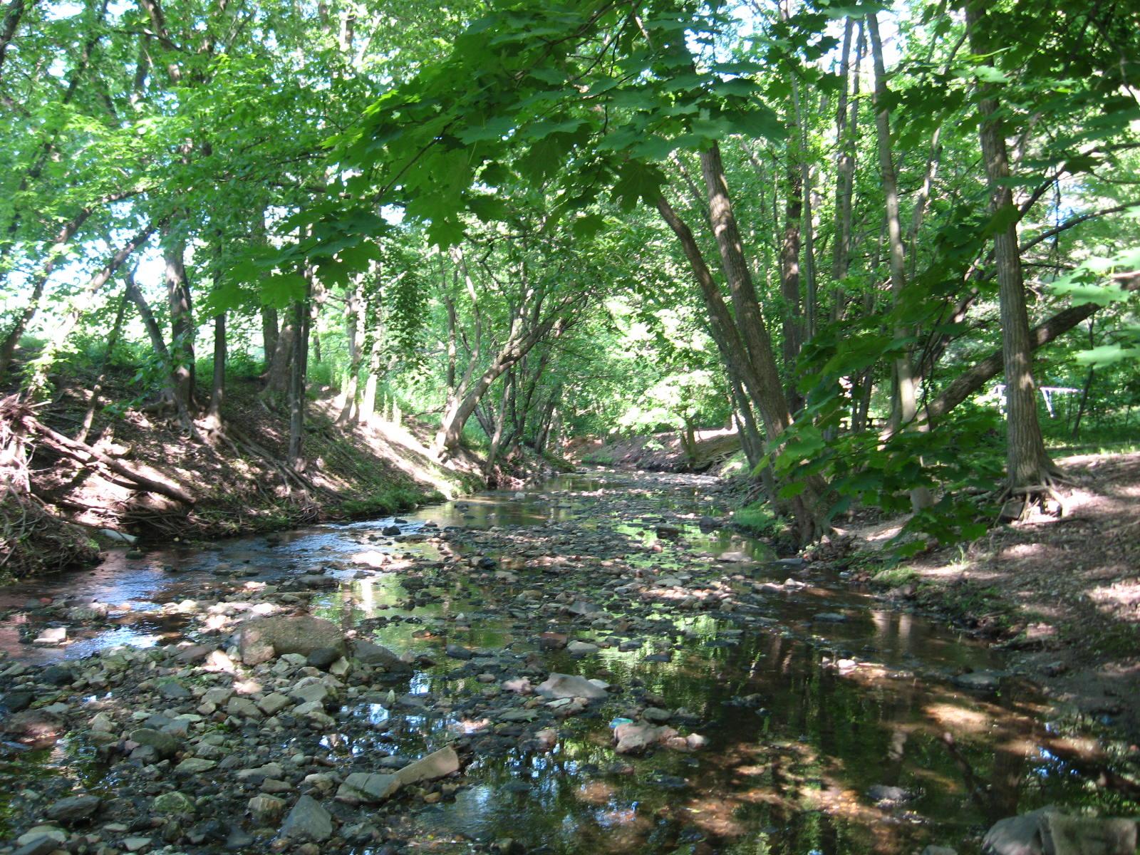 Tookany Creek in Glenside, PA
