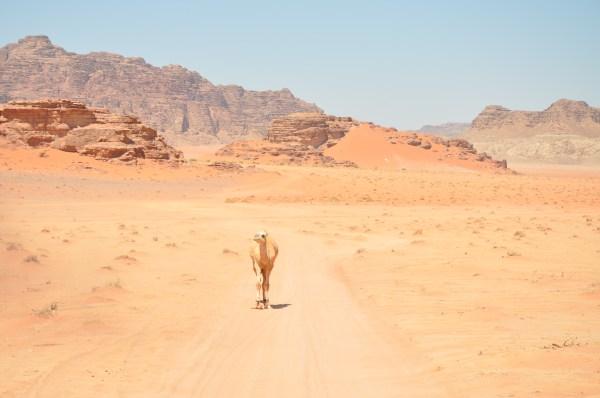 file desert landscape 12464661053