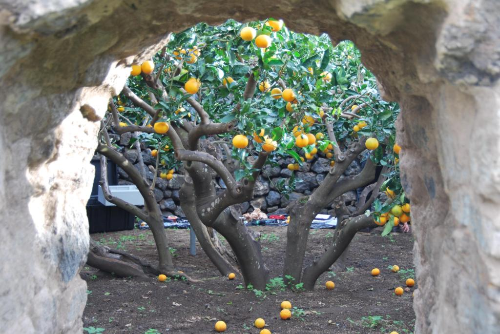 Giardini panteschi  Wikipedia
